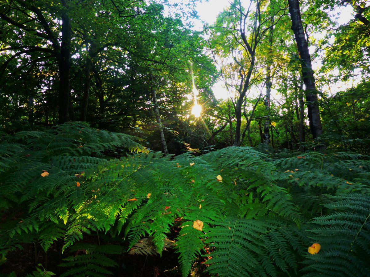 Söndre skog